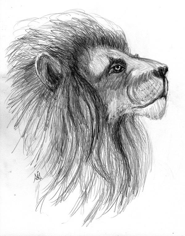Aslan - Sketch © by Jef Murray