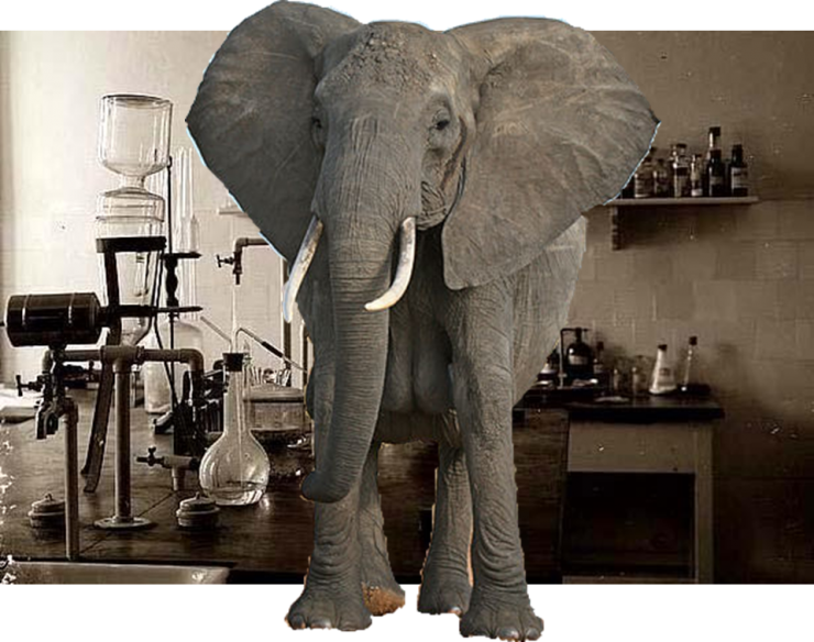 Elephant in the Chem Lab