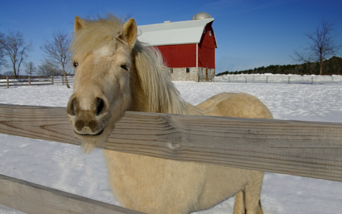 cold-barnyard-horse-featured-w480x300