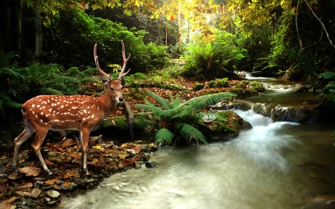 """As the deer longs for streams of water, so my soul longs for you, O God"" (Ps 42)."
