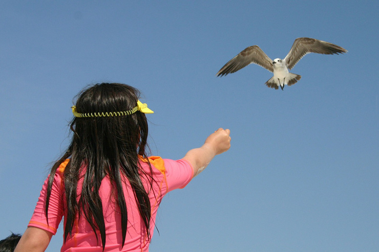 girl-and-sea-gull-featured-w740x493