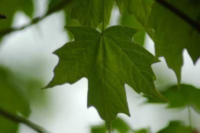 green-leaf-featured-w740x493
