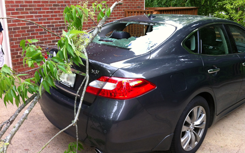hain-tree-limb-on-car-featured-w480x300
