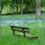 pixabay-bench-in-meadow-silence-featured-w740x493