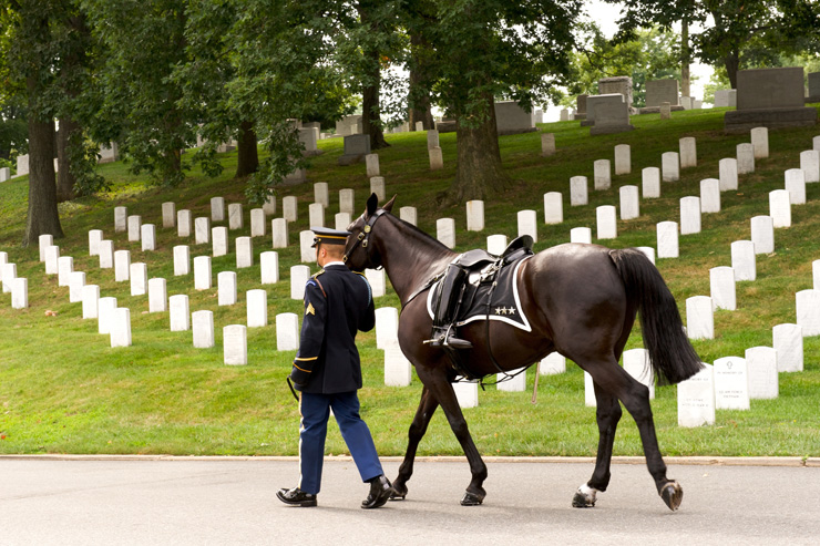 Riderless Horse with boot reversed in stirrup being led in Funeral Procession at Arlington National Cemetery