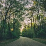 road-through-trees-featured-w740x493